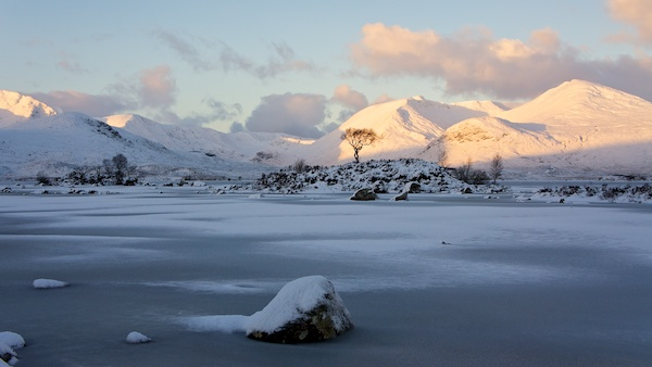 Rannoch Moor tree and Black Mount