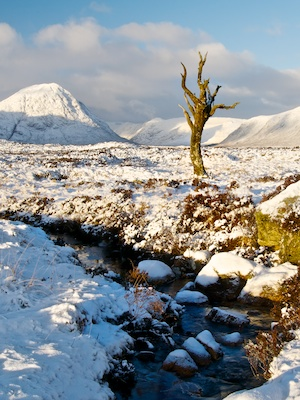 Tree in Rannoch Moor with Glencoe in the background