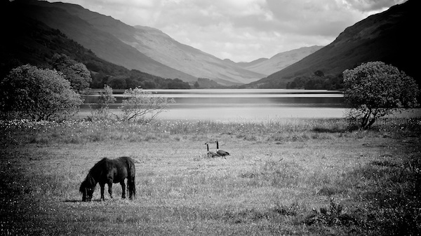 Loch Voil with horse in foreground