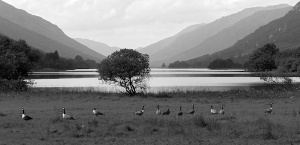 Tree at Loch Voil in monochrome