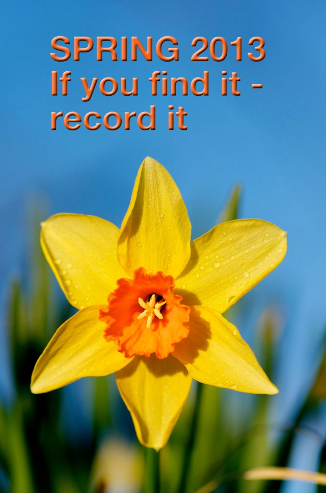 daffodill with bright orange centre and text above reading 'Spring 2013 If you find it - record it'