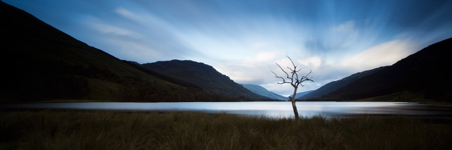 Picture of a tree without leaves in front of a loch with moutons in the distance.