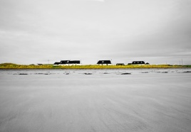 Grey sand on an overcast day leads up to five whit cottages on the grassy shoreline with black roofs.